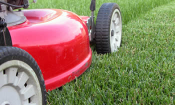 Lawn Care in Bakersfield CA Lawn Care Services in Bakersfield CA Quality Lawn Care in Bakersfield CA