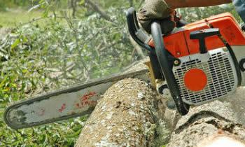 Tree Removal in Bakersfield CA Tree Removal Quotes in Bakersfield CA Tree Removal Estimates in Bakersfield CA Tree Removal Services in Bakersfield CA Tree Removal Professionals in Bakersfield CA Tree Services in Bakersfield CA