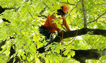 Tree Trimming in Bakersfield CA Tree Trimming Services in Bakersfield CA Tree Trimming Professionals in Bakersfield CA Tree Services in Bakersfield CA Tree Trimming Estimates in Bakersfield CA Tree Trimming Quotes in Bakersfield CA
