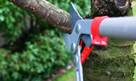 Tree Pruning Services in Bakersfield CA